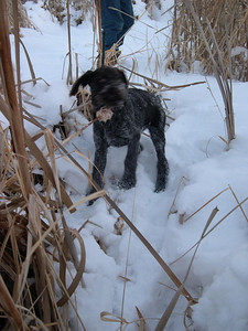 Dixie tastes cattails.