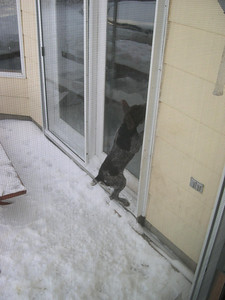 PLEASE let me in!