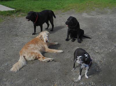 Dog Mountain 2011