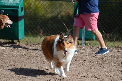 Dog Park 10-7-18