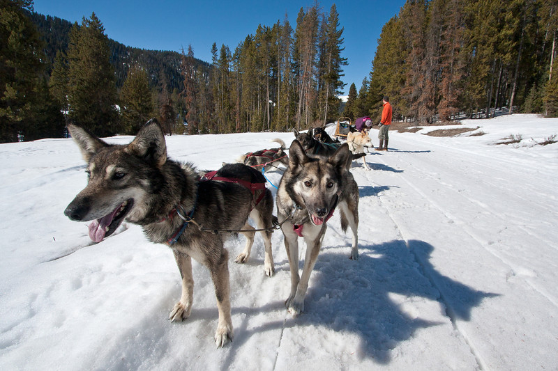 Pack leaders, I think the one on the left is named Sunshine.
