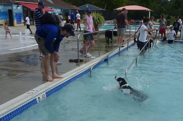dog swim day 2012