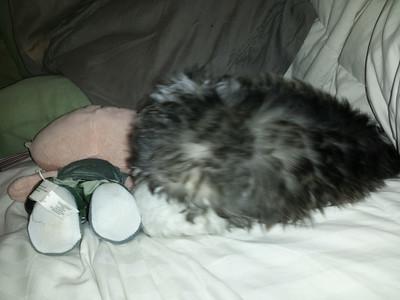 Bernie, oreo, twinkie, Snowball