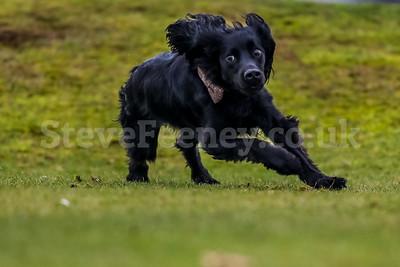 Dog, Dog Shoot, Lickey Hills