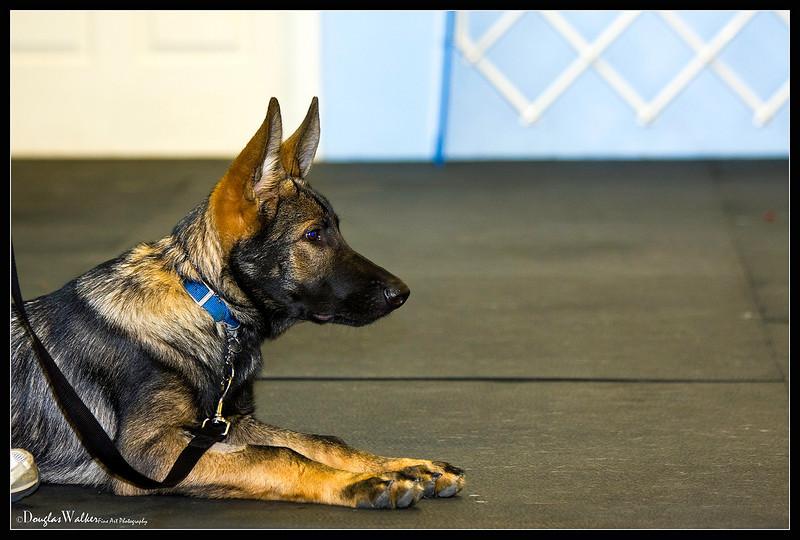 Schutzhund