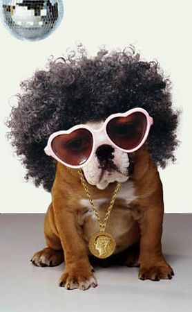 discodoggy