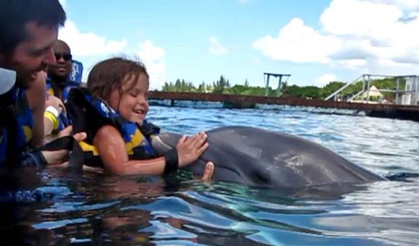 dolphin%204-600x352.jpg