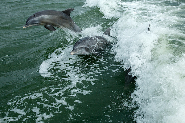 dolphintrip