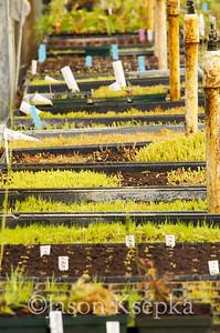 Carnivorous Plants; Rarefind Nursery, Jackson, New Jersey  2012-08-03  #48