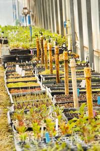 Carnivorous Plants; Rarefind Nursery, Jackson, New Jersey  2012-08-03  #41