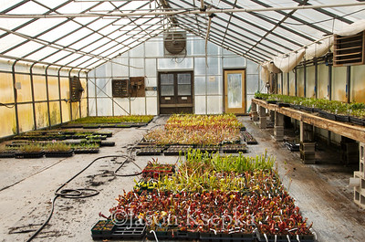 Carnivorous Plants; Rarefind Nursery, Jackson, New Jersey  2012-08-03  #49
