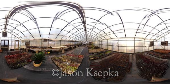 Carnivorous Plants; Rarefind Nursery, Jackson, New Jersey  2012-08-03 Panorama