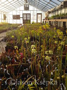 Carnivorous Plants; Rarefind Nursery, Jackson, New Jersey  2012-04-16  #18