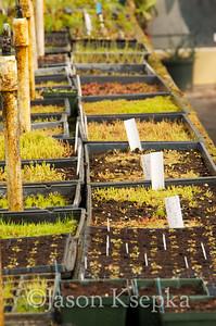 Carnivorous Plants; Rarefind Nursery, Jackson, New Jersey  2012-08-03  #47