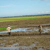Rice Farm Workers En Route to Cotui