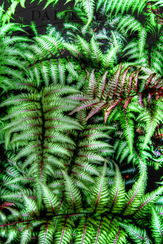 Ferns at Willowwood