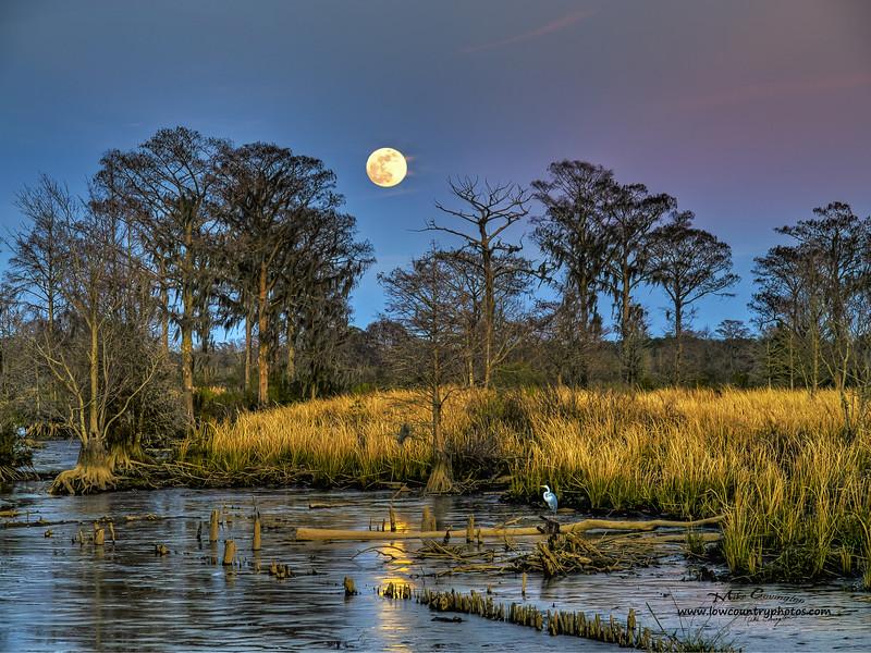 Marsh Moon 36X54
