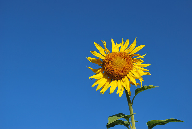 07/18/12:  Have a Bright, Sunny Day!!!