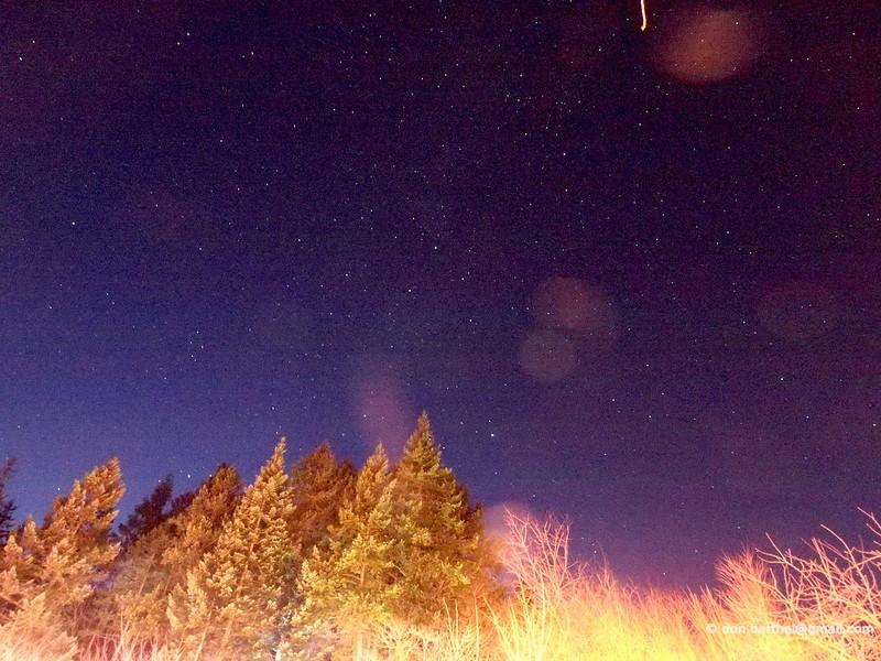Star field above Japanese garden Mayne Island, trees lit by Christmas lights.