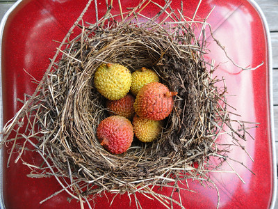 Nesting Lychee on Red Chair