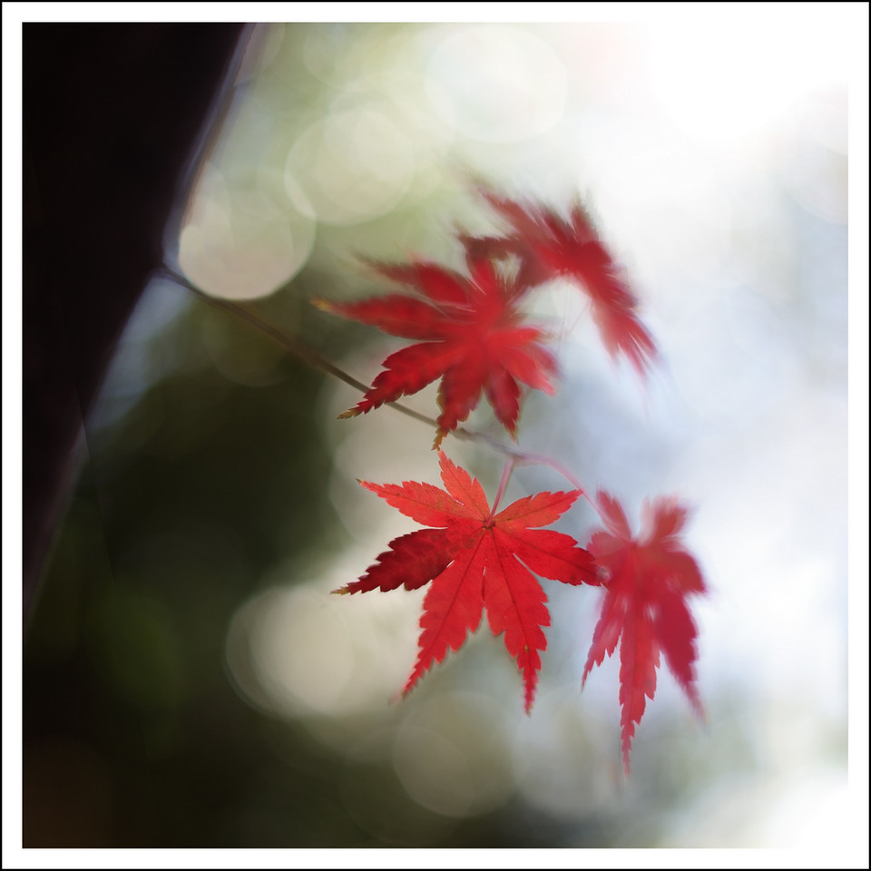 Maple leaves at Setagaya kannon.  4 exposures, done with a tripod.