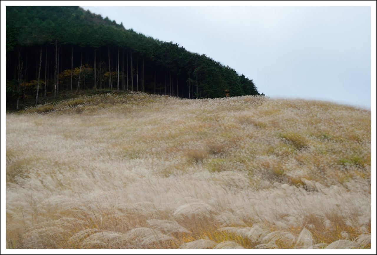 A triple exposure of Sengokuhara pampas fields