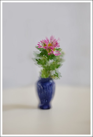 Chrysanthemums in Raymen's vase.  2 exposures.