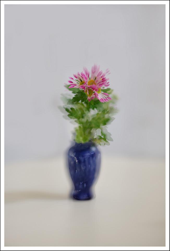 Chrysanthemums in Raymen's vase.  2 exposures.