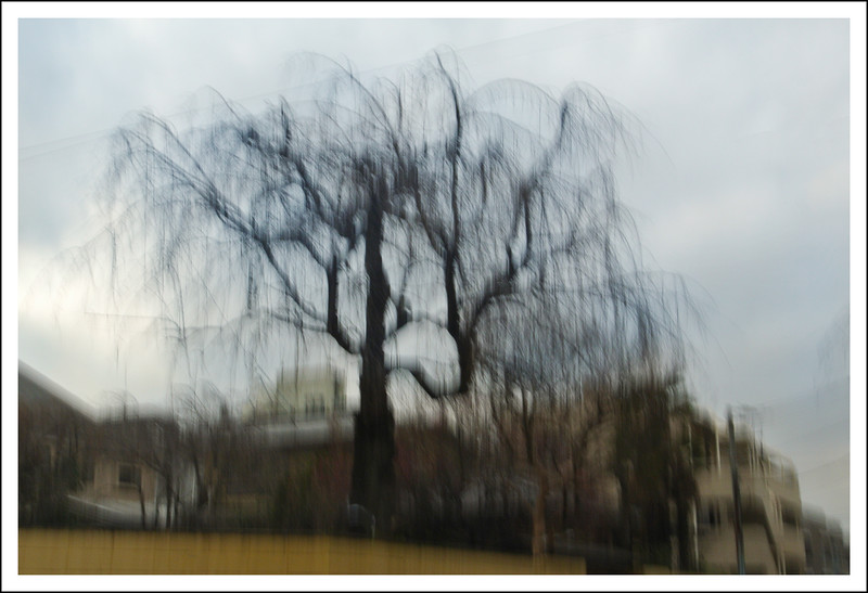 An intentional motion image of a weeping cherry tree in our neighborhood.