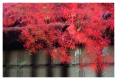 Maple leaves at Setagaya Kannon.  This is multiple exposure and intentional movement combined.