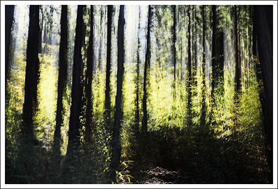Early spring leaves in the forest of Hakone.  6 multiple exposures.