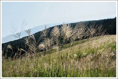 Double exposure.  Sengokuhara pampas grass field