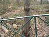 Douglas Park 19-Jan 09-05
