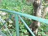 Douglas Park 026