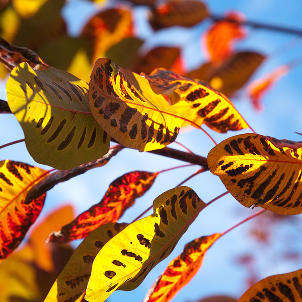 Autumn, Downton, Wiltshire