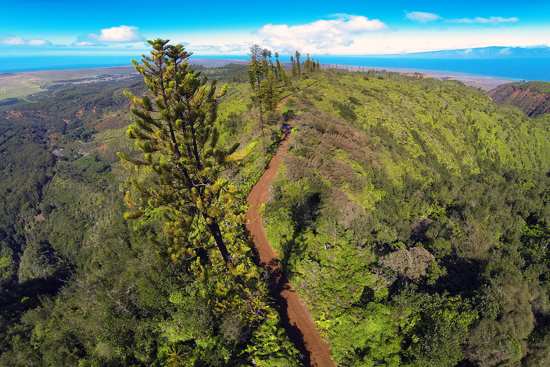 Munro Trail - Lana'i, Hawaii