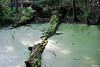 Duck Creek 0024