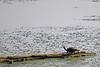 Duck Creek 0028