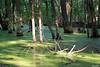 Duck Creek 0025