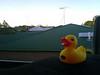Ducky Triumphant