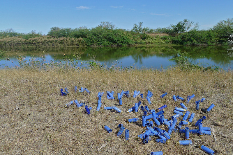 We gathered them and eventually there were 110 shells. In the background no more ducks.