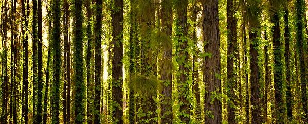 "ETC-3136 ""Backlit Tree Line"""