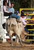 Bull Riding-6