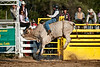 Bull Riding-5