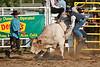 Bull Riding-8