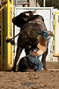 Bull Riding-2