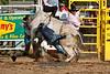Bull Riding-11