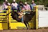 Bull Riding-1