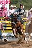 Saddle Bronc-2