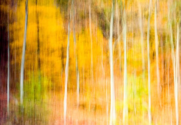 Birch Illusion